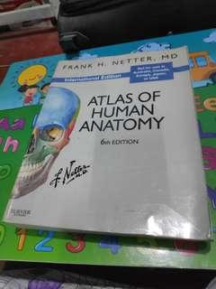 Atlas of Human Anatomy- Netter 6th Edition