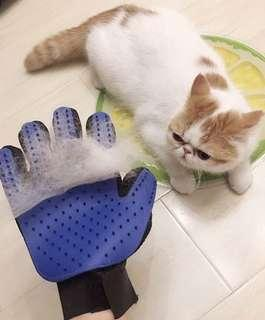 BN Restocked Cats Kittens Pets Magic Grooming Gloves! Take your pick from Blue or Pink! :)