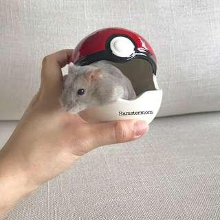 Dwarf Hamsters Pokeball Ceramic Toy Hideout