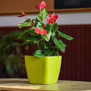 21.5 cm self-watering Plant pot