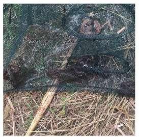 Get 2 baits free bao bao Fish Net Cage shape shrimp fishing  Loach crab cage Fun Hobby