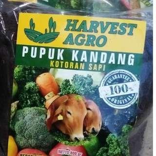 100% organic cow dung (800g)