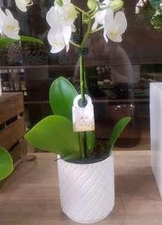 Embossed Flower Pot