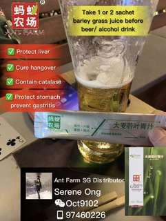 Cure Hangover/ Protect Liver & Stomach - Authentic Ant Farm Barley Grass Juice