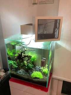 Fluval edge II 46l with extra edgebrite cover + custom cabinet