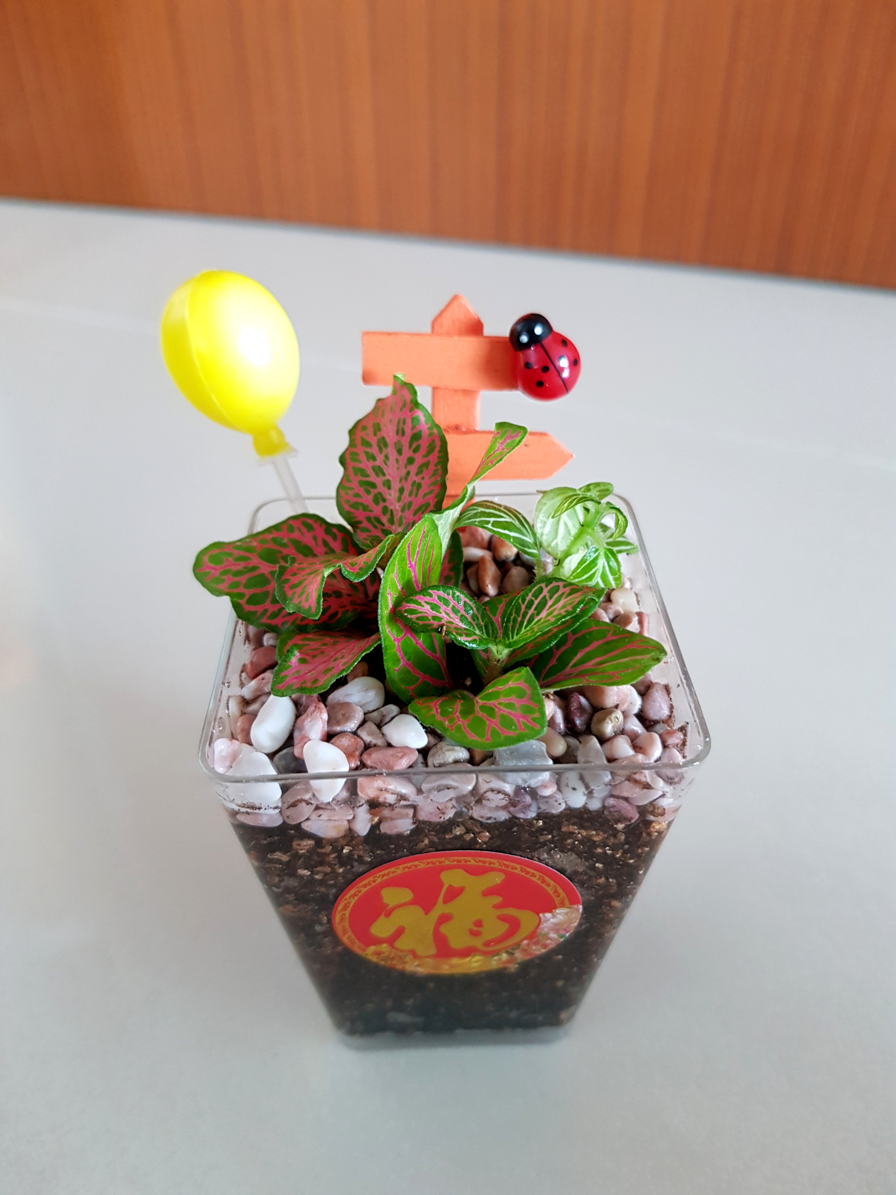 New Year Gift For Office Gardening Plants On Carousell
