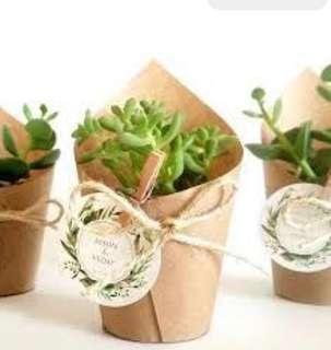 Mini Succulent Door Gift