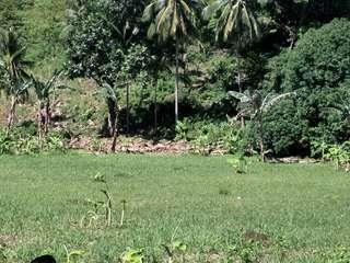 Very Affordable Lot in Danao City