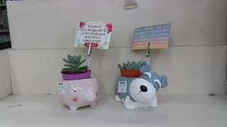 Succulent Plants with Bible Verse