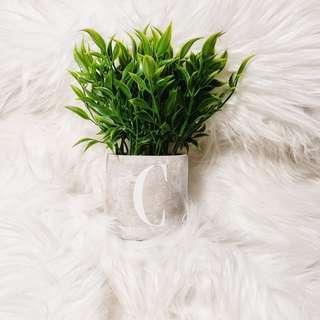 Faux Office Succulents/ Plants