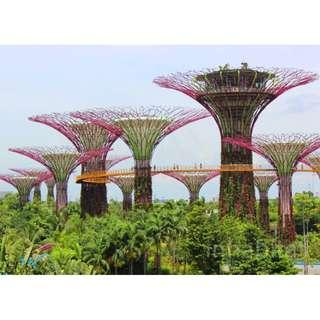 Gardens By The Bay 2 Domes [ PHYSICAL TICKET ]