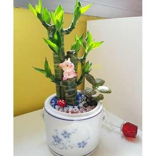CNY Bamboo Plant Terrarium