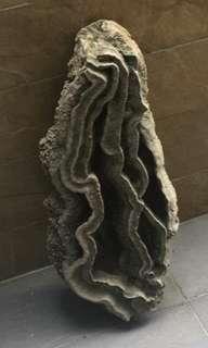 鐘乳石,高2尺,可種植物。(供欣賞)