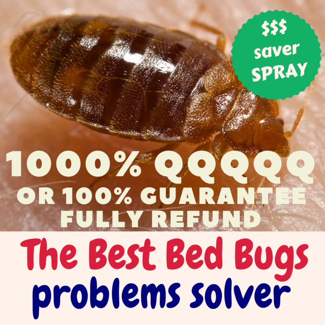 The Best Unbeatable Bedbug Spray Bed Bug Problems 1000 Solved