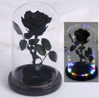 INSTOCK BLACK PRESERVED ROSE