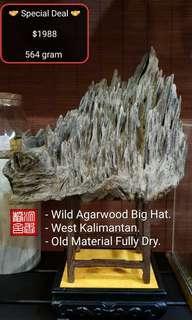 🌿Natural Agarwood Big Hat 🍂Kalimantan 🌿 沉香静舍🌿