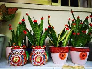 Lucky Air puritgllng plant$18
