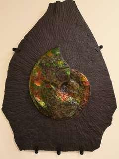 Canadian Ammolite For Wealth And Prosperity