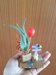Air plant for office!
