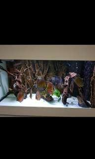 further price reduction $600 by weekend! - 4ft by 2 ft by 2ft N30 fish tank (with sump filtration tank); discus separate sale