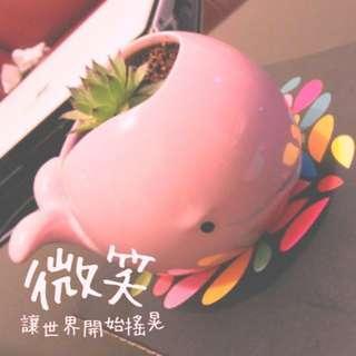 粉色 粉紅 小 鯨魚盆栽 (無植物  僅盆)