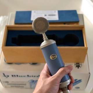 Bluebird Microphone + Studio Set