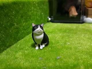 🚚 好奇ㄉ貓貓 扭蛋