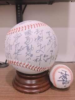 LAMIGO 桃猿 簽名球 棒球 簽名棒球big size