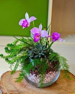 Terrarium | Floral Display