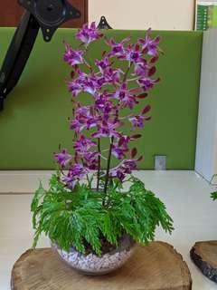 Orchids | Ferns