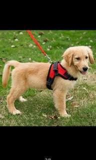 Dog Vest Collar