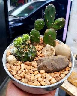 Cactus Dish Garden
