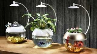 鱼缸装饰 Fish Tank with Pump and Light #CNYHOME
