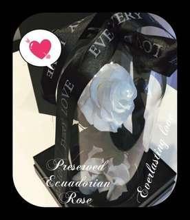 🚚 Valentine's Special - Premium Preserved Ecuadorian Roses