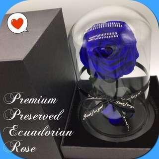🚚 Valentines' Specials - Preserved Ecuadorian Roses