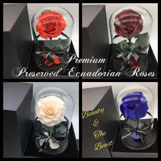 🚚 Beauty & The Beast - Preserved Ecuadorian Roses