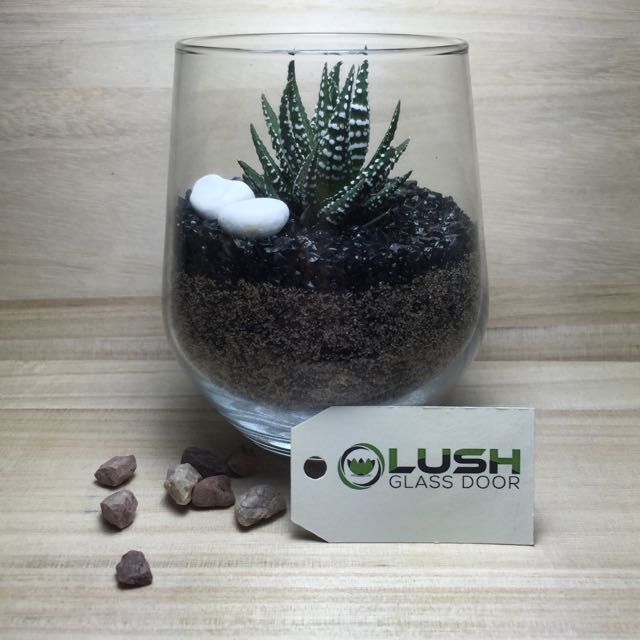 Perfect Gift For Birthday Housewarming Farewell Real Plant
