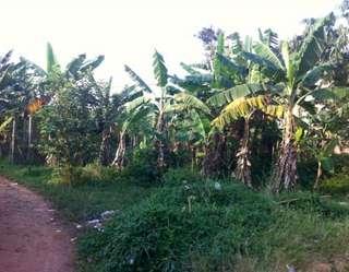 Turun harga, Tanah AJB (dari SHM) di Bojong Sempu, Parung, Bogor LT +/- 3.438 M