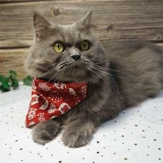 (In stock) AFL Neko Bandana Pet Collar in Red