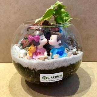 Perfect Gift for valentines/ Vday/ Anniversary/ Birthday/ House warming/ Christmas/ Xmas - Real succulent Plant Terrarium
