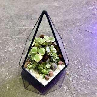 Perfect Gift for Valentines/ Vday/ Anniversary/ Birthday/ Christmas/ Congrats/ Farewell/ House warming/ Event Gifts- Real Plant Succulents/ Cactus Geometric Terrarium