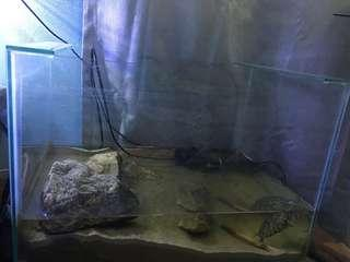 2 sets of aquarium and 2 turtles