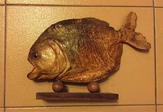 🚚 食人魚 標本