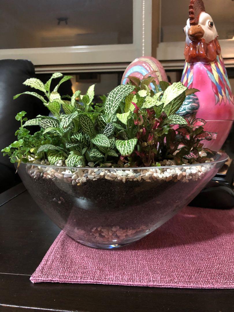 Terrarium In A Bowl Gardening Plants On Carousell