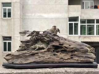 《紫氣東來》四川雅安金絲楠木古沉木