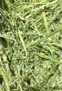 SPECIAL OFFER!! Sweet Alfalfa For Young and Nursing Bunnies, Guinea Pigs and Chins