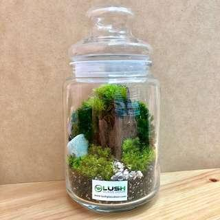 Perfect Gift for birthday/ thank you/ Housewarming/ farewell/ Valentines/ Vday/ Christmas - Real Plant moss Terrarium