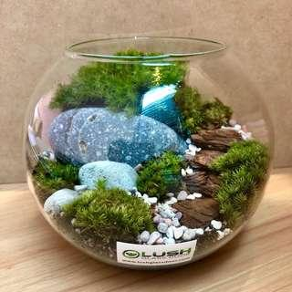 Perfect Gift for valentines/ Vday/ Anniversary/ Birthday/ House warming/ Christmas/ Xmas - Real moss landscape Terrarium