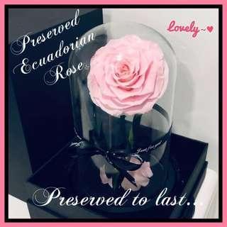 🚚 Special Valentine's Gift - Preserved Ecuadorian Rose
