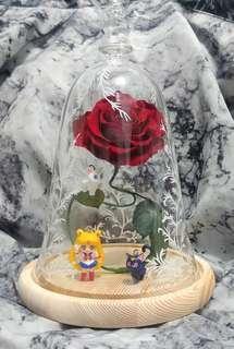 紅玫瑰保鮮花 配 美少女戰士 露娜 亞提密斯